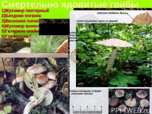 Смертельно ядовитые грибы 1)Мухомор пантерный 2)Бледная поганка 3)Весенняя поган