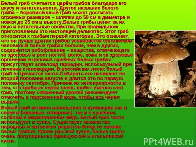 Белый гриб считается царём грибов благодаря его вкусу и питательности. Другое название белого гриба – боровик.Белый гриб может достигать огромных размеров – шляпки до 50 см в диаметре и ножки до 25 см в высоту.Белые грибы ценят за их вкус и питатель…