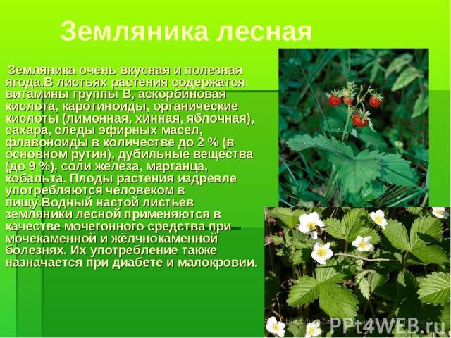 Земляника лесная Земляника очень вкусная и полезная ягода.В листьях растения содержатся витамины группы B, аскорбиновая кислота, каротиноиды, органические кислоты (лимонная, хинная, яблочная), сахара, следы эфирных масел, флавоноиды в количестве до …