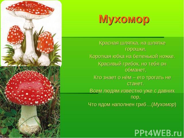 Мухомор Красная шляпка, на шляпке горошки, Короткая юбка на беленькой ножке. Красивый грибок, но тебя он обманет, Кто знает о нём – его трогать не станет. Всем людям известно уже с давних пор, Что ядом наполнен гриб…(Мухомор)