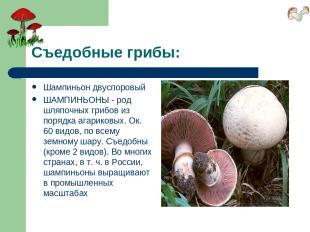 Съедобные грибы: Шампиньон двуспоровый ШАМПИНЬОНЫ - род шляпочных грибов из поря