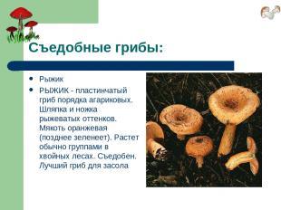 Съедобные грибы: Рыжик РЫЖИК - пластинчатый гриб порядка агариковых. Шляпка и но