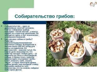 Собирательство грибов: Собирательство – одно из древнейших занятий человека. Сей