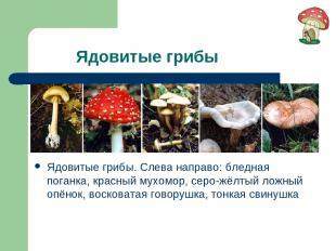 Ядовитые грибы Ядовитые грибы. Слева направо: бледная поганка, красный мухомор,