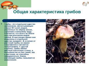 Общая характеристика грибов Грибы– это отдельное царство организмов, насчитывающ