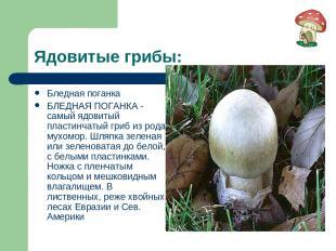 Ядовитые грибы: Бледная поганка БЛЕДНАЯ ПОГАНКА - самый ядовитый пластинчатый гр