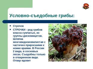 Условно-съедобные грибы: Строчок СТРОЧКИ - род грибов класса сумчатых, из группы