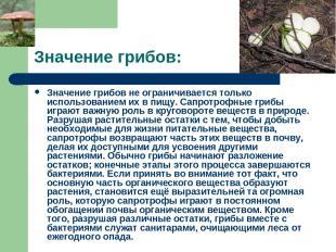 Значение грибов: Значение грибов не ограничивается только использованием их в пи