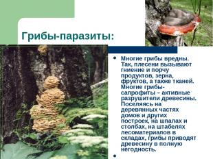 Грибы-паразиты: Многие грибы вредны. Так, плесени вызывают гниение и порчу проду