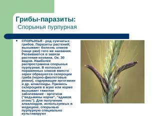 Грибы-паразиты: Спорынья пурпурная СПОРЫНЬЯ - род сумчатых грибов. Паразиты раст