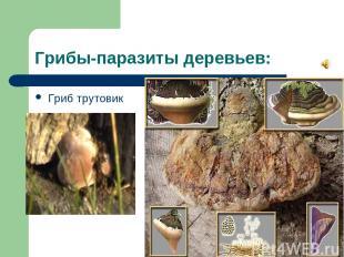 Грибы-паразиты деревьев: Гриб трутовик