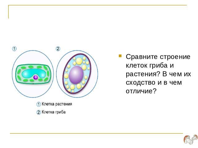 Сравните строение клеток гриба и растения? В чем их сходство и в чем отличие?