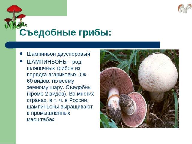 Съедобные грибы: Шампиньон двуспоровый ШАМПИНЬОНЫ - род шляпочных грибов из порядка агариковых. Ок. 60 видов, по всему земному шару. Съедобны (кроме 2 видов). Во многих странах, в т. ч. в России, шампиньоны выращивают в промышленных масштабах