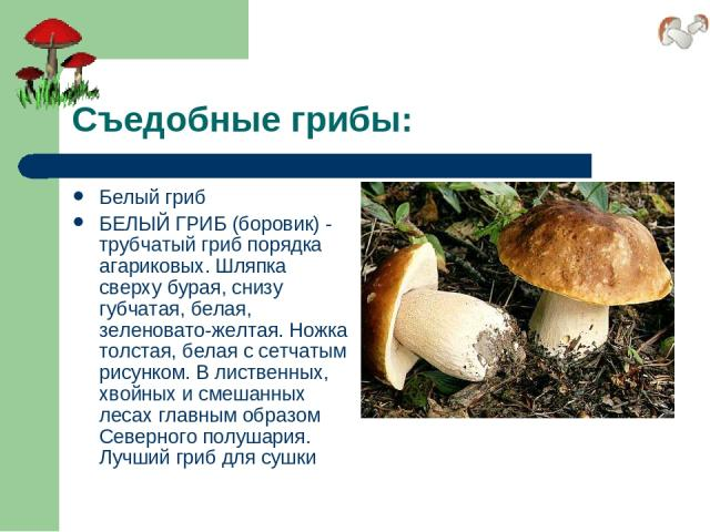 Съедобные грибы: Белый гриб БЕЛЫЙ ГРИБ (боровик) - трубчатый гриб порядка агариковых. Шляпка сверху бурая, снизу губчатая, белая, зеленовато-желтая. Ножка толстая, белая с сетчатым рисунком. В лиственных, хвойных и смешанных лесах главным образом Се…