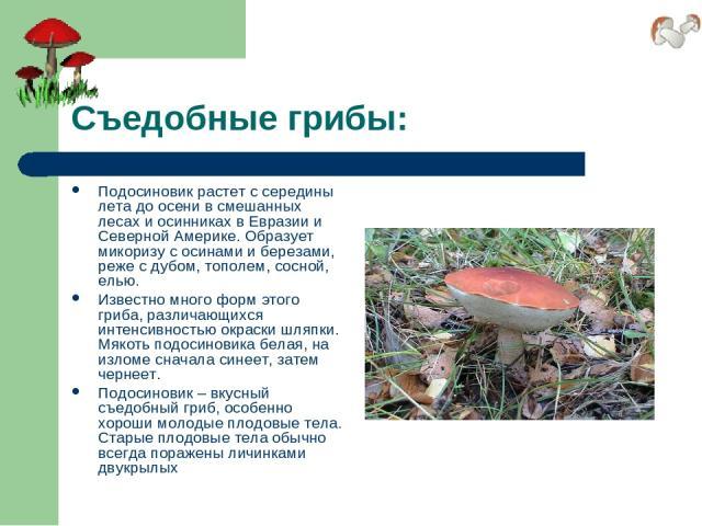 Съедобные грибы: Подосиновик растет с середины лета до осени в смешанных лесах и осинниках в Евразии и Северной Америке. Образует микоризу с осинами и березами, реже с дубом, тополем, сосной, елью. Известно много форм этого гриба, различающихся инте…