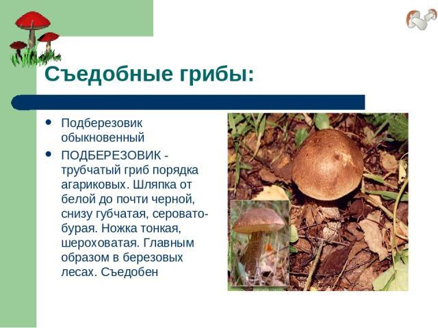 Съедобные грибы: Подберезовик обыкновенный ПОДБЕРЕЗОВИК - трубчатый гриб порядка агариковых. Шляпка от белой до почти черной, снизу губчатая, серовато-бурая. Ножка тонкая, шероховатая. Главным образом в березовых лесах. Съедобен