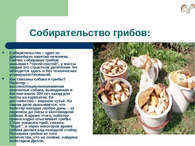 """Собирательство грибов: Собирательство – одно из древнейших занятий человека. Сейчас собирание грибов называют """"тихой охотой"""", у массы людей это страстное увлечение. Не обходится здесь и без технических усовершенствований. Как связаны собака и грибы?…"""