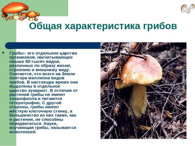 Общая характеристика грибов Грибы– это отдельное царство организмов, насчитывающее свыше 80 тысяч видов, различных по образу жизни, строению и внешнему виду. Считается, что всего на Земле полтора миллиона видов грибов. В настоящее время они выделены…