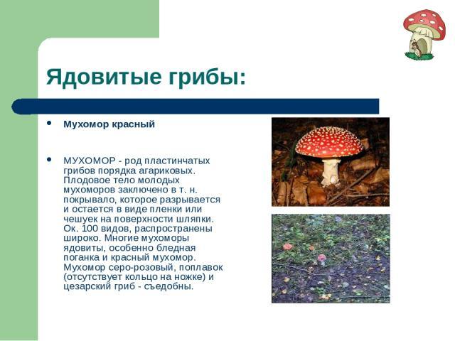 Ядовитые грибы: Мухомор красный МУХОМОР - род пластинчатых грибов порядка агариковых. Плодовое тело молодых мухоморов заключено в т. н. покрывало, которое разрывается и остается в виде пленки или чешуек на поверхности шляпки. Ок. 100 видов, распрост…