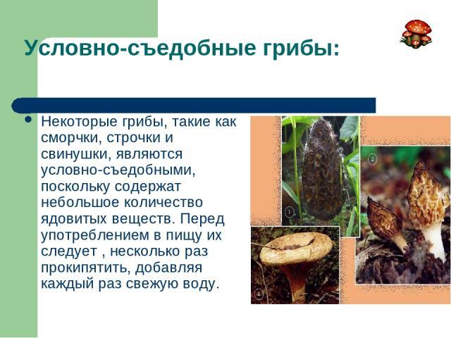 Условно-съедобные грибы: Некоторые грибы, такие как сморчки, строчки и свинушки, являются условно-съедобными, поскольку содержат небольшое количество ядовитых веществ. Перед употреблением в пищу их следует , несколько раз прокипятить, добавляя кажды…