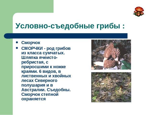 Условно-съедобные грибы : Сморчок СМОРЧКИ - род грибов из класса сумчатых. Шляпка ячеисто-ребристая, с приросшими к ножке краями. 6 видов, в лиственных и хвойных лесах Северного полушария и в Австралии. Съедобны. Сморчок степной охраняется