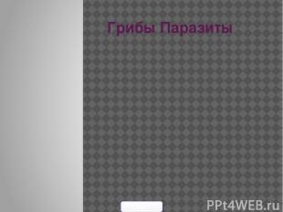 Грибы Паразиты 900igr.net