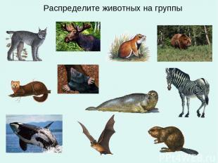 Распределите животных на группы