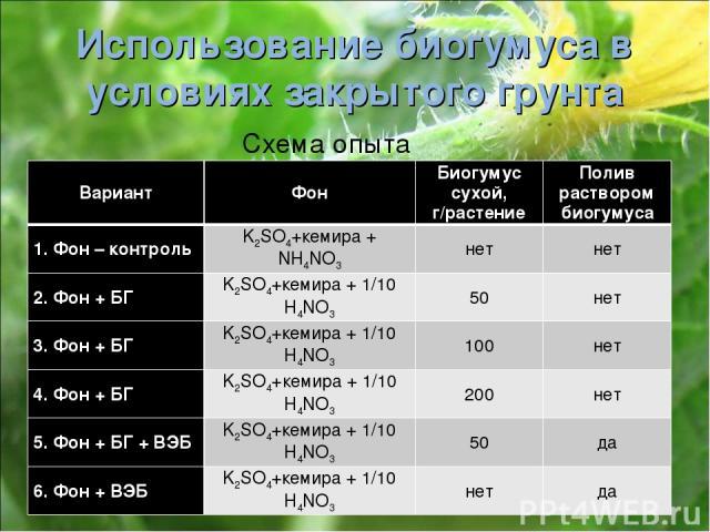 Использование биогумуса в условиях закрытого грунта Схема опыта Вариант Фон Биогумус сухой, г/растение Полив раствором биогумуса 1. Фон – контроль K2SO4+кемира + NH4NO3 нет нет 2. Фон + БГ K2SO4+кемира + 1/10 H4NO3 50 нет 3. Фон + БГ K2SO4+кемира + …