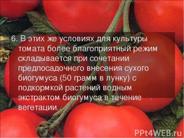 6. В этих же условиях для культуры томата более благоприятный режим складывается при сочетании предпосадочного внесения сухого биогумуса (50 грамм в лунку) с подкормкой растений водным экстрактом биогумуса в течение вегетации.