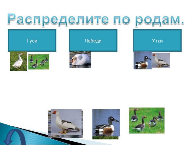 Гуси Лебеди Утки