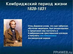 Кембриджский период жизни 1828-1831 Отец Дарвина узнав, что сын забросил обучени