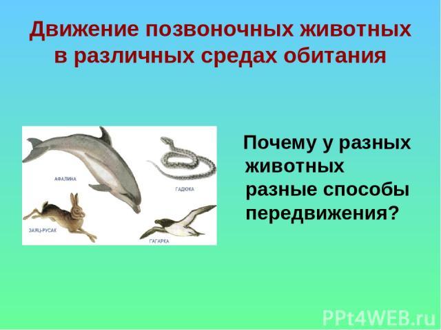 иллюстрированые чувствительности животных примеры связи