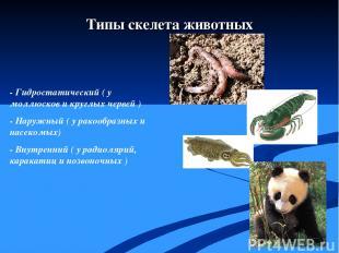 - Гидростатический ( у моллюсков и круглых червей ) - Наружный ( у ракообразных