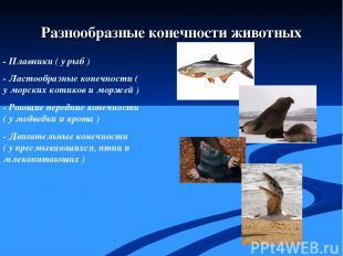 - Плавники ( у рыб ) - Ластообразные конечности ( у морских котиков и моржей ) -