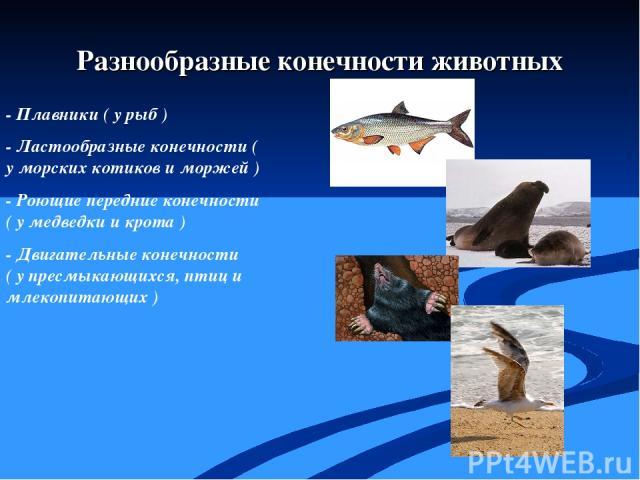 - Плавники ( у рыб ) - Ластообразные конечности ( у морских котиков и моржей ) - Роющие передние конечности ( у медведки и крота ) - Двигательные конечности ( у пресмыкающихся, птиц и млекопитающих ) Разнообразные конечности животных