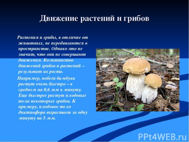Движение растений и грибов Растения и грибы, в отличие от животных, не передвигаются в пространстве. Однако это не значит, что они не совершают движения. Большинство движений грибов и растений – результат их роста. Например, побеги бамбука растут оч…