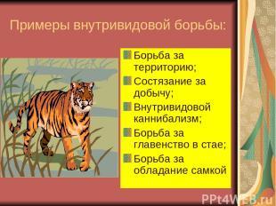 Примеры внутривидовой борьбы: Борьба за территорию; Состязание за добычу; Внутри