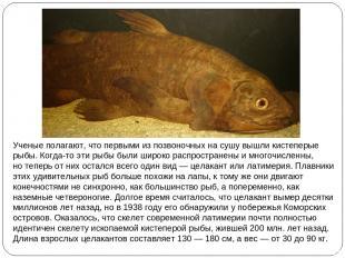 Ученые полагают, что первыми изпозвоночных насушу вышли кистеперые рыбы. Когда