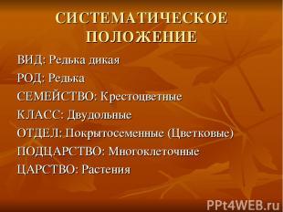 СИСТЕМАТИЧЕСКОЕ ПОЛОЖЕНИЕ ВИД: Редька дикая РОД: Редька СЕМЕЙСТВО: Крестоцветные