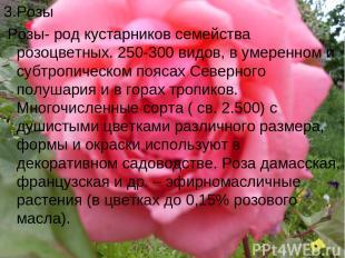 3.Розы Розы- род кустарников семейства розоцветных. 250-300 видов, в умеренном и