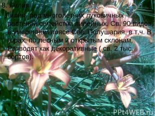 8. Лилия Лилия- род многолетних луковичных растений семейства лилейных. Св. 90 в