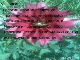 5.Георгин Георгин – род многолетних травянистых растений семейства сложноцветных