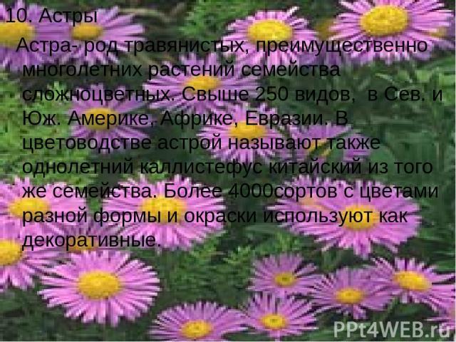 10. Астры Астра- род травянистых, преимущественно многолетних растений семейства сложноцветных. Свыше 250 видов, в Сев. и Юж. Америке, Африке, Евразии. В цветоводстве астрой называют также однолетний каллистефус китайский из того же семейства. Более…
