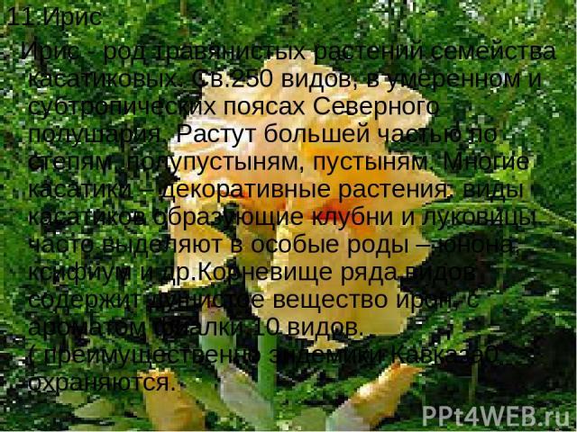 11.Ирис Ирис - род травянистых растений семейства касатиковых. Св.250 видов, в умеренном и субтропических поясах Северного полушария. Растут большей частью по степям, полупустыням, пустыням. Многие касатики – декоративные растения. виды касатиков об…