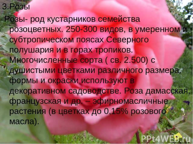 3.Розы Розы- род кустарников семейства розоцветных. 250-300 видов, в умеренном и субтропическом поясах Северного полушария и в горах тропиков. Многочисленные сорта ( св. 2.500) с душистыми цветками различного размера, формы и окраски используют в де…