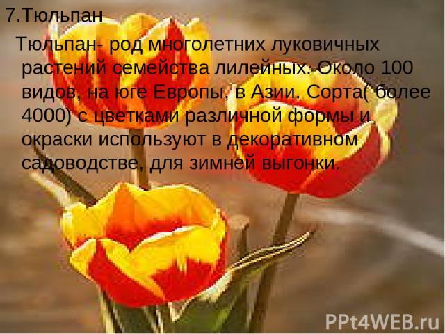 7.Тюльпан Тюльпан- род многолетних луковичных растений семейства лилейных. Около 100 видов, на юге Европы, в Азии. Сорта( более 4000) с цветками различной формы и окраски используют в декоративном садоводстве, для зимней выгонки.