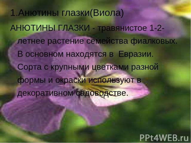 1.Анютины глазки(Виола) АНЮТИНЫ ГЛАЗКИ - травянистое 1-2-летнее растение семейства фиалковых. В основном находятся в Евразии. Сорта с крупными цветками разной формы и окраски используют в декоративном садоводстве.
