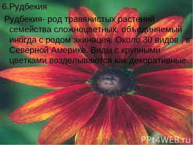 6.Рудбекия Рудбекия- род травянистых растений семейства сложноцветных, объединяемый иногда с родом эхинацея. Около 30 видов , в Северной Америке. Виды с крупными цветками возделываются как декоративные.