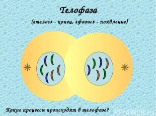 Телофаза («телос» - конец, «фазис» - появление) Какие процессы происходят в тело