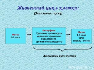Жизненный цикл клетки: (Заполните схему) Митоз 1-2 часа Митоз 1-2 часа или гибел